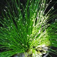 Fiber Optic Grass